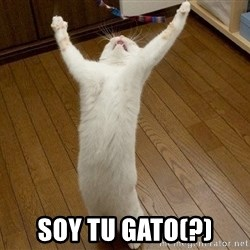 praise the lord cat - Soy tu gato(?)