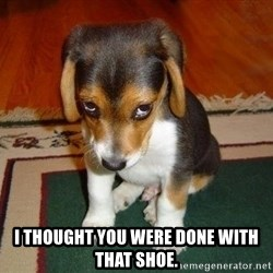 Sad Puppy - I thought you were done with that shoe.