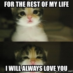 Adorable Kitten - For the rest of my life I will always love you