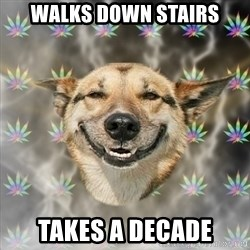 Stoner Dog - walks down stairs takes a decade