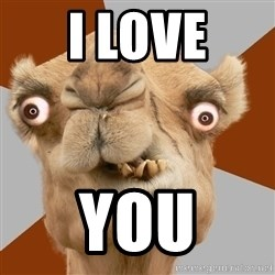 Crazy Camel lol - I LOVE YOU