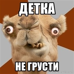 Crazy Camel lol - детка не грусти