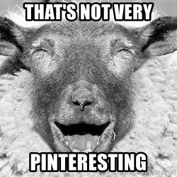 Laughing Sheep - That's not very pinteresting