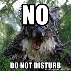 Wet Koala - NO DO NOT DISTURB