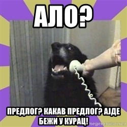 Yes, this is dog! - ало? предлог? какав предлог? ајде бежи у курац!