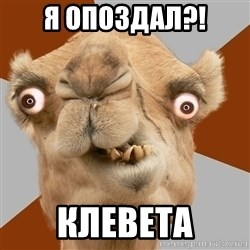 Crazy Camel lol - Я опоздал?! Клевета