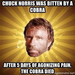 Chuck Norris Advice - CHUCK NORRIS WAS BITTEN BY A COBRA AFTER 5 DAYS OF AGONIZING PAIN, THE COBRA DIED