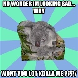 Clinically Depressed Koala - no wonder im looking sad... why  wont you lot koala me ???/