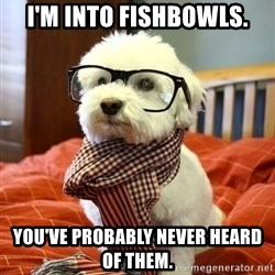 hipster dog - I'm into fishbowls. you've probably never heard of them.