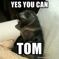 Baby Seal On Couch - yes you can tom