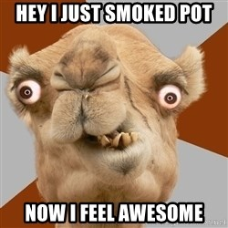 Crazy Camel lol - HEY I JUST SMOKED POT NOW I FEEL AWESOME