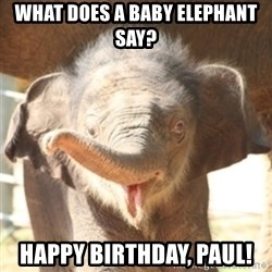 baby elephant - What does a baby elephant say?  Happy Birthday, Paul!