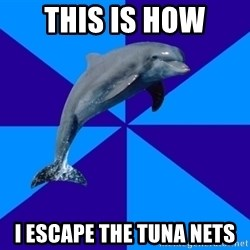 Drama Dolphin - This is how I escape the Tuna nets