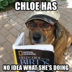 Dog Studying - Chloe Has No Idea What She's Doing