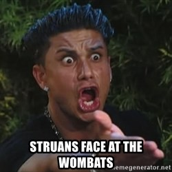 Flippinpauly -  struans face at the wombats