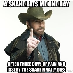 chuck norris cowboy hat - A snake bits me one day After three days of pain and issery the snake finally dies