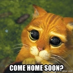 Sad Eyed Cat -  Come home soon?