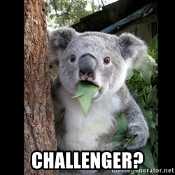 Koala can't believe it - challenger?