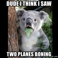 Koala can't believe it - dude i think i saw two planes boning