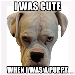 stahp guise - i was cute  when I was a puppy