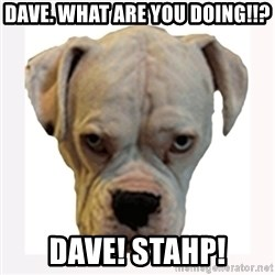 stahp guise - DAVE. What are you doing!!? DAVE! STAHP!