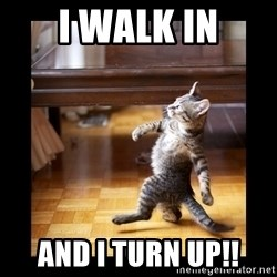 cat swag - I walk in And I turn up!!