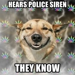 Stoner Dog - Hears police siren They know