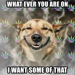 Stoner Dog - what ever you are on I want some of that