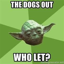 Advice Yoda Gives - THE DOGS OUT WHO LET?