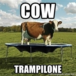 Unimpressionable Cow - Cow  Trampilone