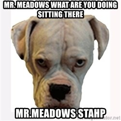 stahp guise - MR. mEADOWS WHAT ARE YOU DOING SITTING THERE MR.MEADOWS STAHP