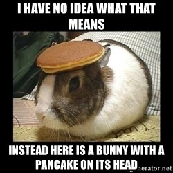 Bunny with Pancake on Head - I have no idea what that means Instead here is a bunny with a pancake on its head