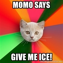 Advice Cat - momo says give me ice!
