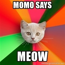 Advice Cat - momo says meow