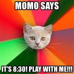 Advice Cat - Momo says it's 8:30! play with me!!!