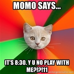 Advice Cat - momo says... it's 8:30. y u no play with me?!?!11