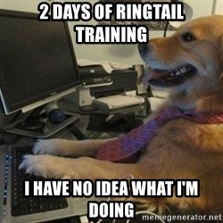 I have no idea what I'm doing - Dog with Tie - 2 Days of Ringtail Training I have no idea what i'm doing