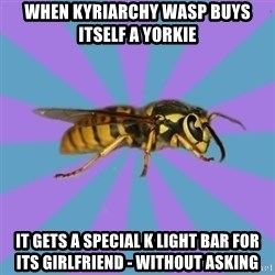 kyriarchy wasp - when kyriarchy wasp buys itself a Yorkie it gets a Special K Light bar for its girlfriend - without asking