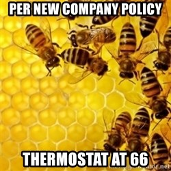 Honeybees - per new company policy thermostat at 66