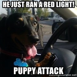 puppycop - He just ran a red light! puppy attack