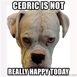 stahp guise - cedric is not really happy today