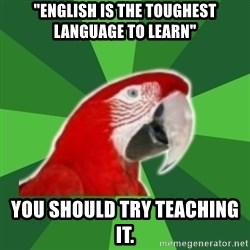 """SLP Parrot - """"English is the toughest Language to Learn"""" You should try teaching it."""