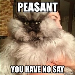 Colonel Meow - PEASANT YOU HAVE NO SAY