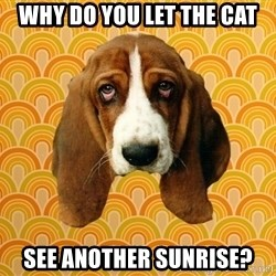 SAD DOG - Why do you let the cat See another sunrise?