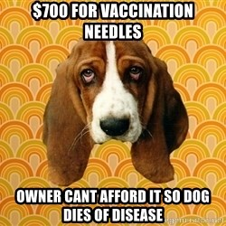 SAD DOG - $700 for vaccination needles owner cant afford it so dog dies of disease