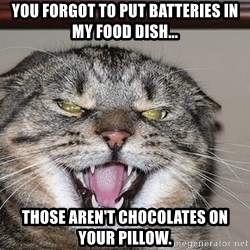 Angry Cat - you forgot to put batteries in my food dish... those aren't chocolates on your pillow.