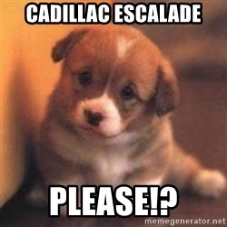 cute puppy - Cadillac Escalade Please!?