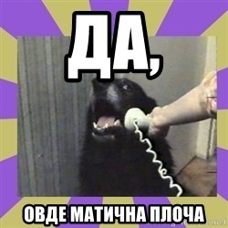 Yes, this is dog! - да, овде матична плоча