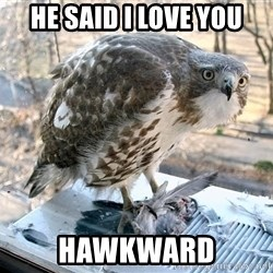 Hawkward - He Said I love you HAwkward
