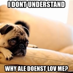 Sorrowful Pug - i dont understand why ale doenst lov me?